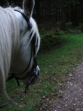 Slieve Aughty Riding Centre: On a dreamy white horse, in the dreamy green forest