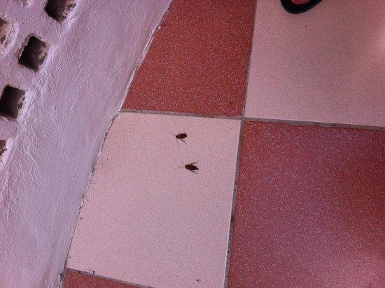 Apartamentos Las Faluas: Cockroaches
