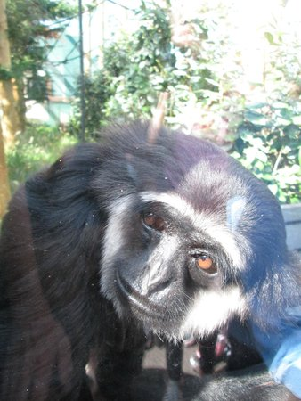 Monkey World: surprising how close u can get to some