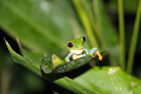 Hotel Casa Turire : Frog