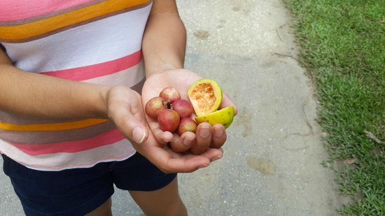 Laguna Mar Lodge : Local fruits