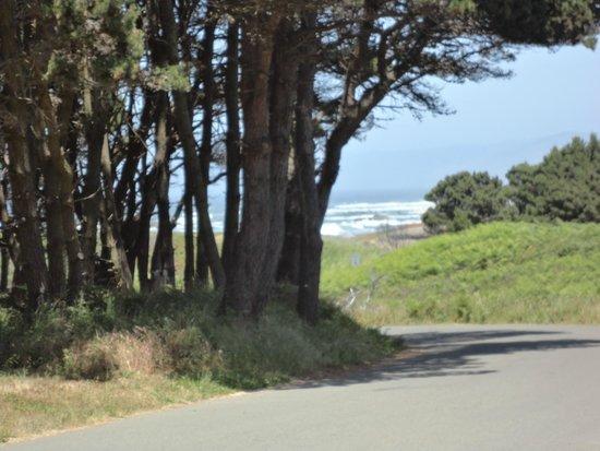 MacKerricher State Park: Ocean View