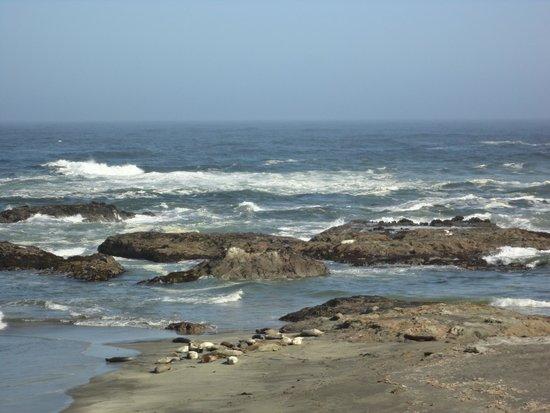 MacKerricher State Park: Seal Resting Area