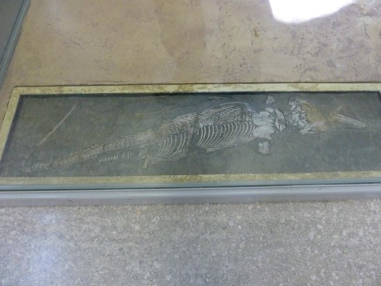 The Manchester Museum: Icthyosaur fossil