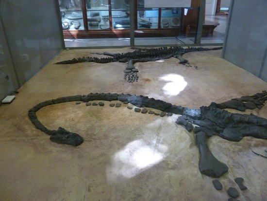 The Manchester Museum: Plesiosaur fossil cast