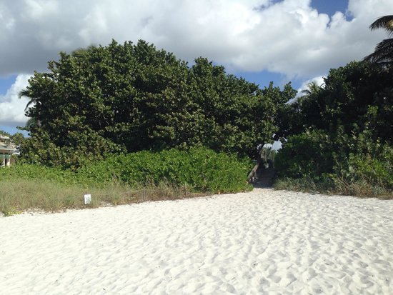Inn on Fifth : Beach