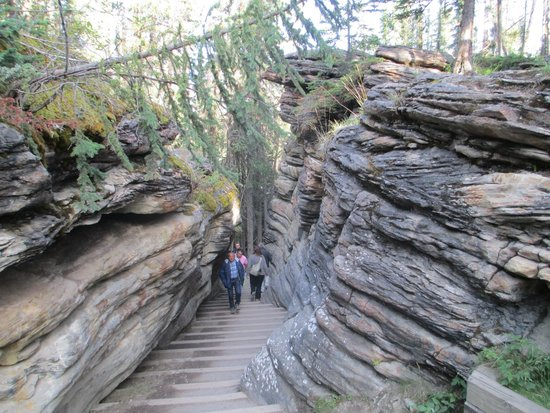 Athabasca Falls: Many steps to negotiate