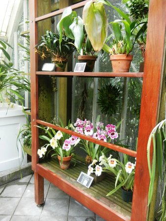 Conservatory of Flowers SF
