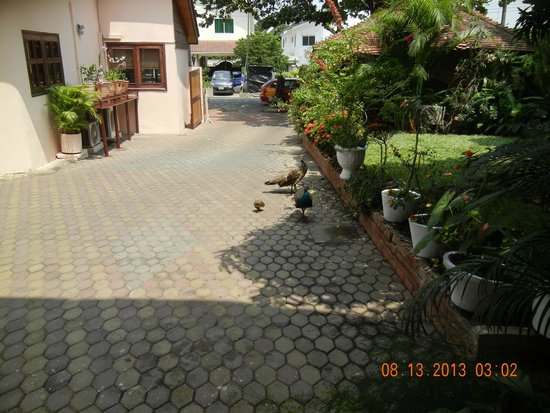 Esther's Hotel : Driveway at Esther's--parking can be a little bit tight