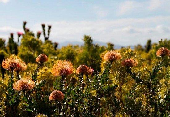 Farm 215 Nature Retreat & Fynbos Reserve : The fynbos at Farm 215