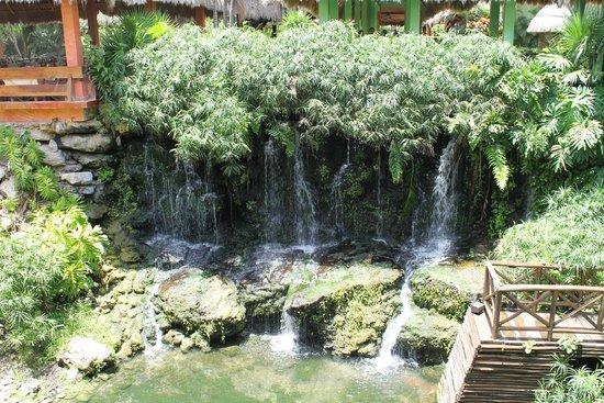 Iberostar Tucan Hotel: Floresta - observação de animais