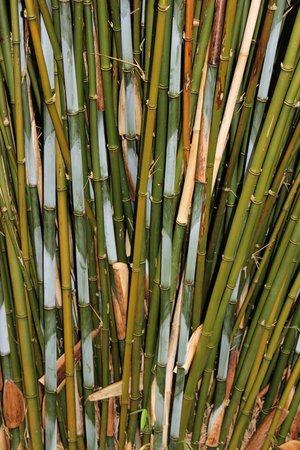 Tremenheere Sculpture Gardens: Tremenheere Bamboo