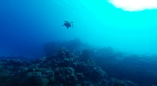 Epic Divers: One of the many turtles we saw on our dives!