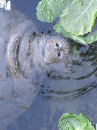 Ellie Schiller Homosassa Springs Wildlife State Park : Ariel