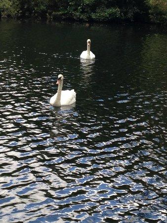 Phoenix Park: Quiet