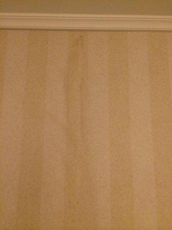 Parmelia Hilton: Watermarks on old wallpaper