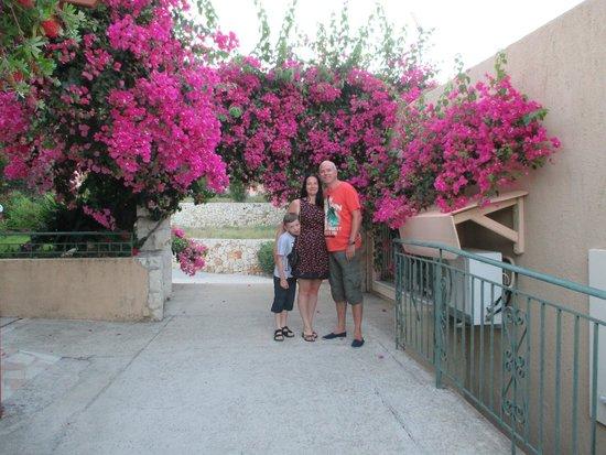 Eleana Studios: The rather lovely gardens
