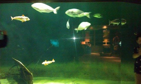 Nordsoen Oceanarium : fishtank2