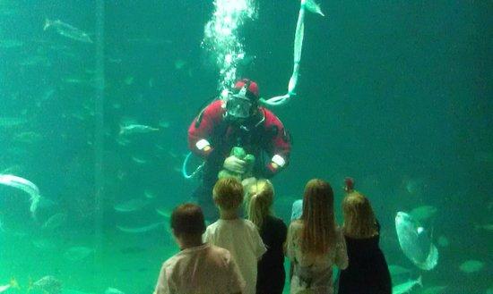 Nordsoen Oceanarium : feeding the fish