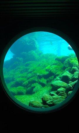 Nordsoen Oceanarium: under water
