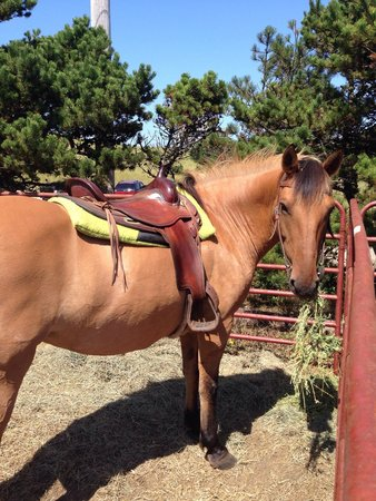 Green Acres Beach & Trail Rides: Her name is Tiny. She's a gentle giant.