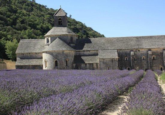 Abbaye de Sénanque : Abbaye de Senanque