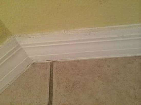 Summerwind Resort: Baseboards are not dusted or cleaned