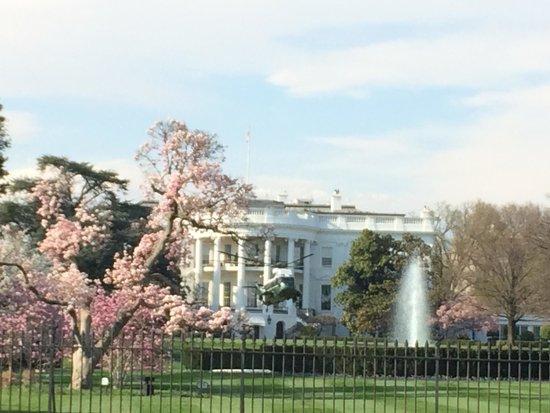 Tidal Basin : White House
