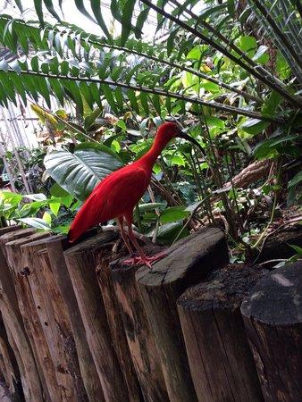 Tropical World: Beautiful.