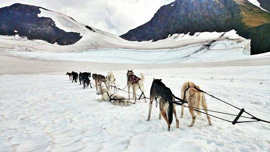 Alpine Air Alaska: Let. The dog sledding begin