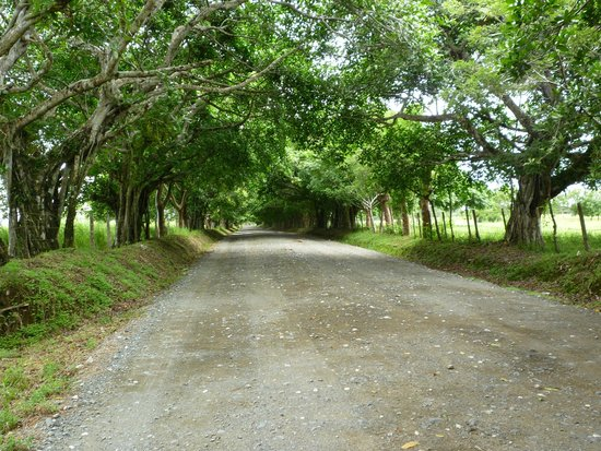 Osa Rainforest Rentals: Road to the house