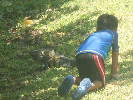 Grand Bahia Principe Coba : Iguanas are everywhere