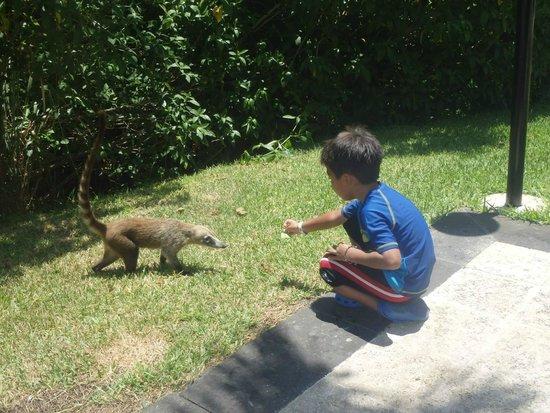 Grand Bahia Principe Coba : Coatis. He's pretending to feed it. It's really a leaf