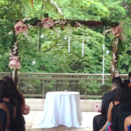 Jungle Island: Lush Greenery background on the terrace