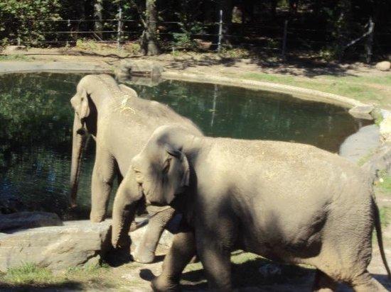 Bronx Zoo : Alguns dos animais