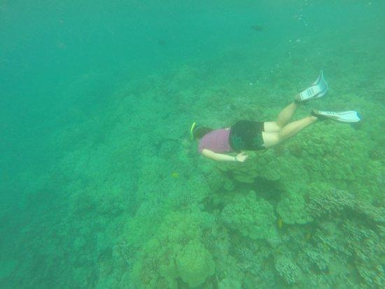 Adventures in Paradise Kayak & Snorkel: Snorkeling on the reef