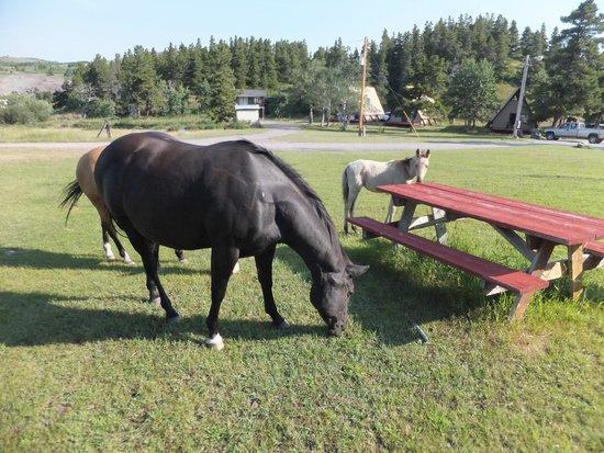 Bison Creek Ranch: Baby, mom and grandma