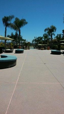 Sheraton Carlsbad Resort and Spa: The Pool
