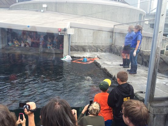 Seattle Aquarium : They put on a show about the Harbor Seals that was pretty neat and informative.