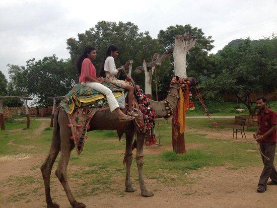 Shilpgram: Camel ride