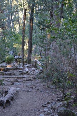 Cascada de los Duendes: bosque