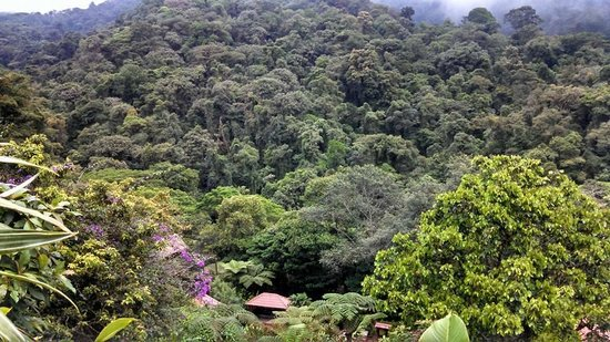 La Paz Waterfall Gardens: Areal view of the waterfall gardens