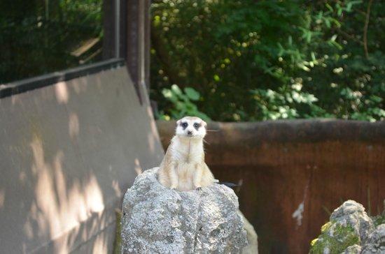 Riverbanks Zoo and Botanical Garden: Cute Meerkat