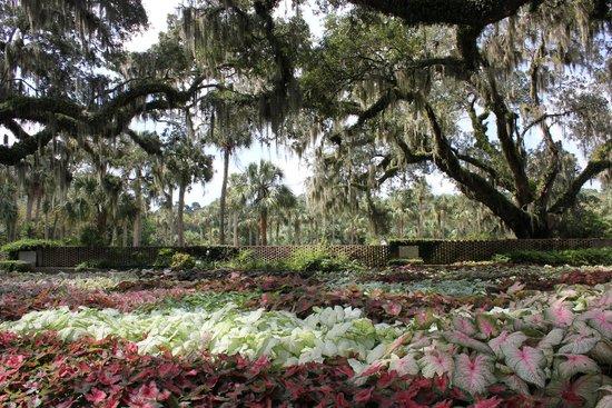Brookgreen Gardens: Gardens