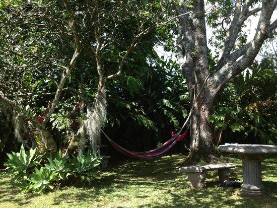 Pura Vida Retreat & Spa : Nap potential !