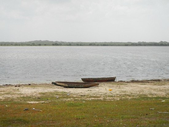 Crooked Tree Wildlife Sanctuary: Dug out canoes sit by the edge of lagoon