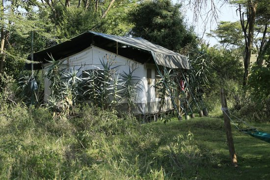 Porini Mara Camp: From The Jungle