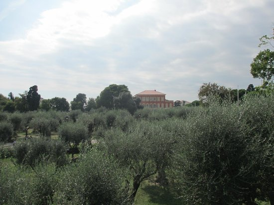 Musée Matisse : Musee Matisse: olive trees and parkland surrounding museum