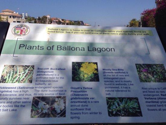 Ballona Creek: Lagoon