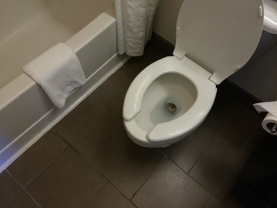 Candlewood Suites Orange County/Airport: The pooper!